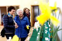 Annual Daffodil Spring Flower Show in St. Macartin's Cathedral Hall, Enniskillen-2