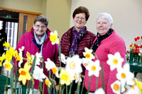 Annual Daffodil Spring Flower Show in St. Macartin's Cathedral Hall, Enniskillen-4