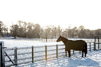 Colebrooke Estate in Winter