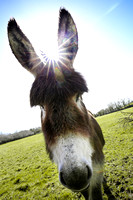 Sunburst over a Donkey.