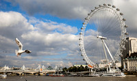 A Seagull and The London Eye.